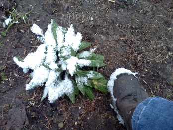 April Blizzards