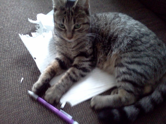 Kitty Editor